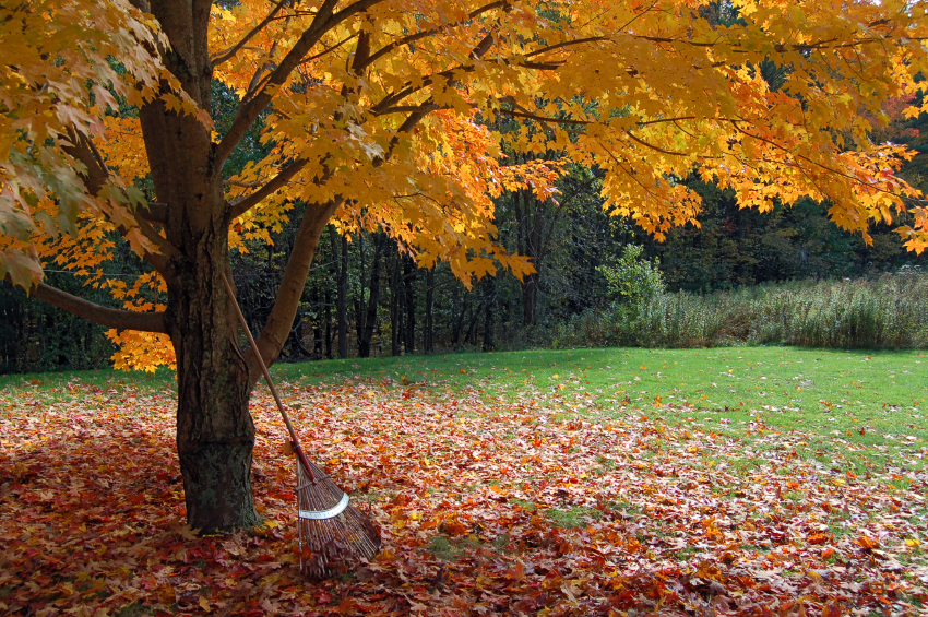 Tips on Autumn Lawn Care   Lawn Care in the Fall